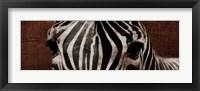 Framed Zebra Eyes
