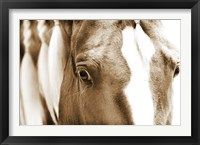 Framed Braided Mane Sepia