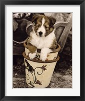 Framed Potted Pup