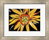 Framed Sunflower
