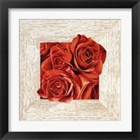 Framed French Roses I