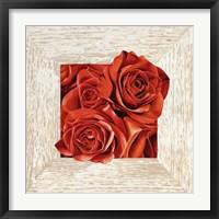 French Roses I Framed Print