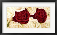 Framed Rose Composition