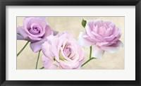 Framed Rose Classiche