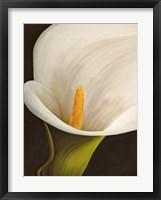Calla Moderna II Framed Print