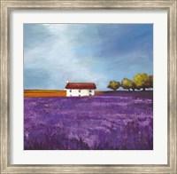 Framed Field of Lavender I