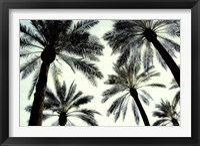 Framed Palm One