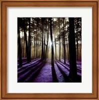 Framed Technicolor Trees 4