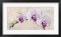 Framed Royal Orchid