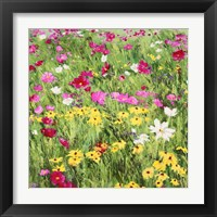 Framed Country Flowers