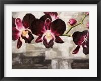 Framed Velvet Orchids