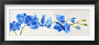 Framed Blue Orchid