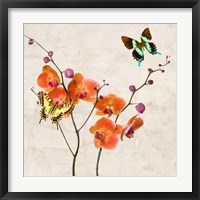 Framed Orchids & Butterflies I