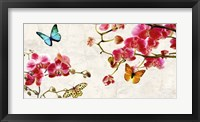 Framed Orchids & Butterflies