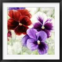 Framed Pansies I