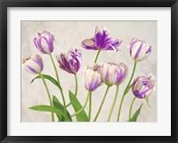 Framed Tulipes