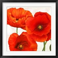 Framed Poppies I