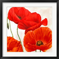 Framed Poppies II