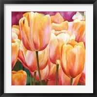 Framed Spring Tulips I