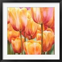 Framed Spring Tulips II
