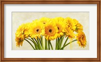 Framed Gerbera Abstraction