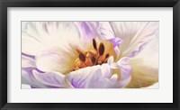Framed Tulipe