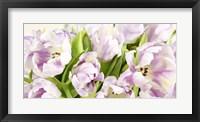 Framed Tulipes en Fleur