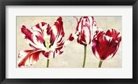 Framed Tulipes Royales