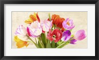Framed Tulips in Spring