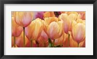 Framed Summer Tulips