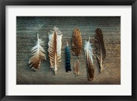Framed Feather Collection I