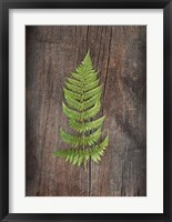 Framed Woodland Fern I