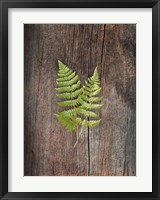 Framed Woodland Fern II