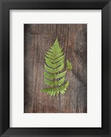 Framed Woodland Fern IV