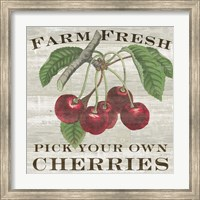 Framed Farm Fresh Cherries I