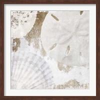 Framed White Shells I