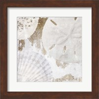 Framed White Shells I