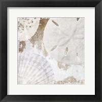 White Shells I Framed Print