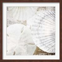 Framed White Shells II