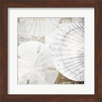 Framed White Shells II