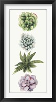 Row of Succulents II Framed Print