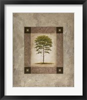 Framed European Pine II