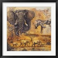 Framed Safari II