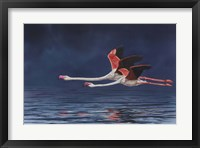 Framed Flying Flamingos