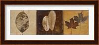 Framed Natural Panel II
