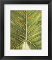Framed Green Zoom III