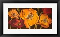 Framed Dazzling Poppies II (black background)