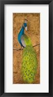 Framed Peacocks II