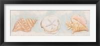 Sandy Shells II Framed Print