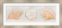Framed Sandy Shells II